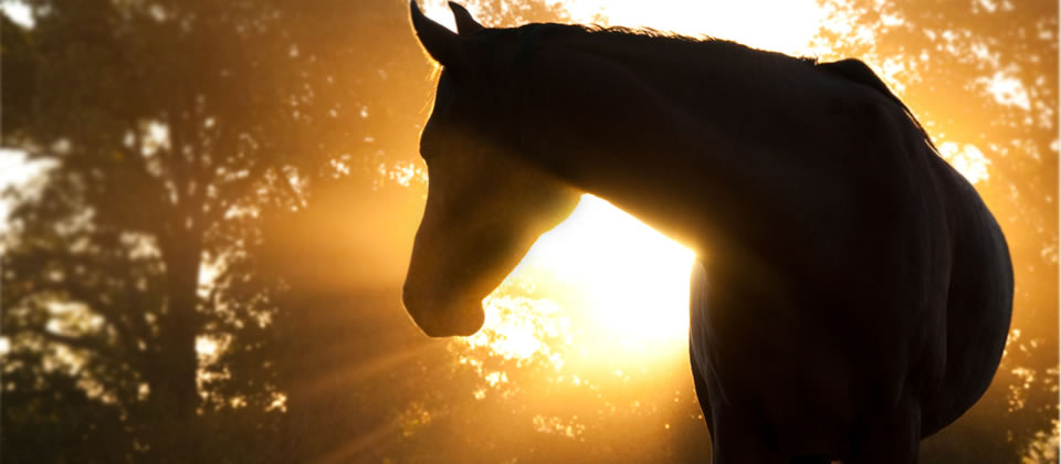Natural products for horses